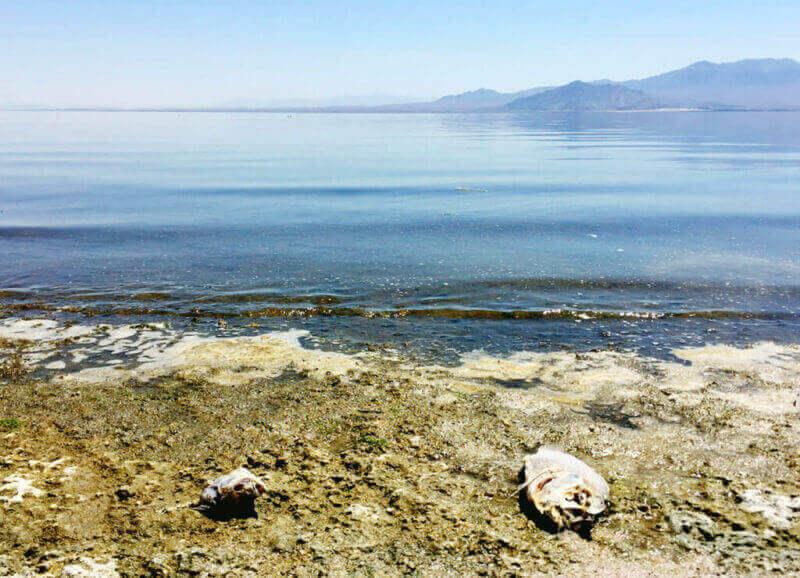 Dead fish scatter the shore