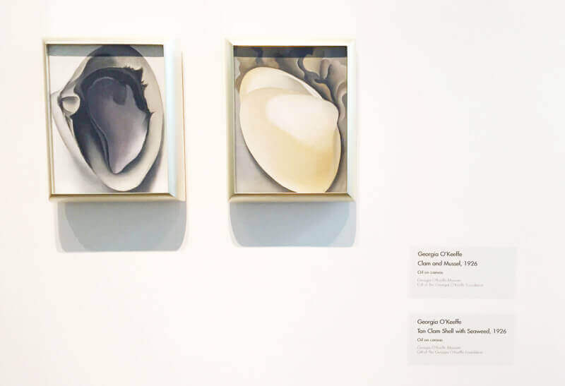 Georgia O'Keeffe Museum, Paintings: Clam and the Mussel; Tan Clam Shell with Seaweed