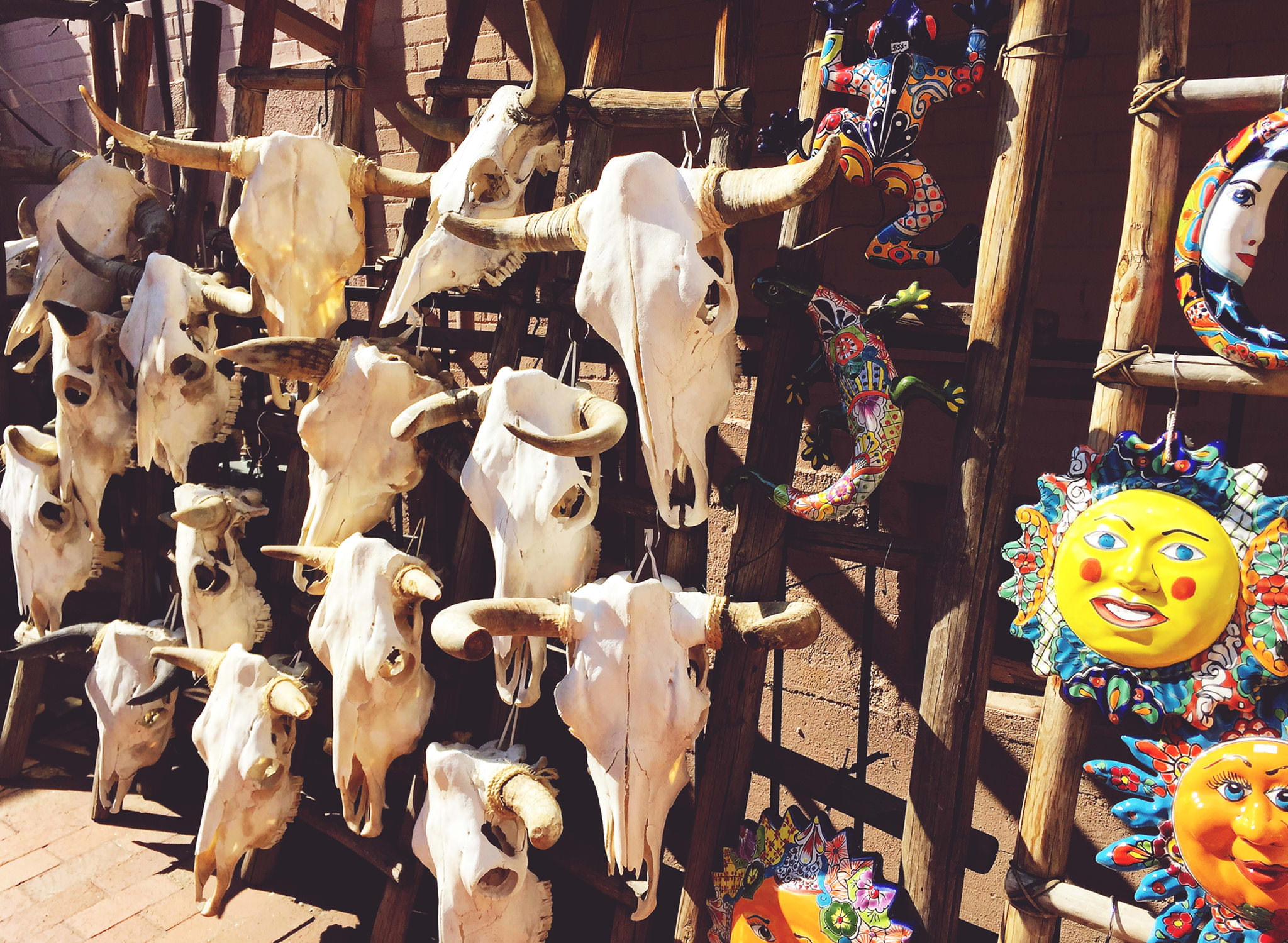 Cow skulls in Santa Fe, New Mexico