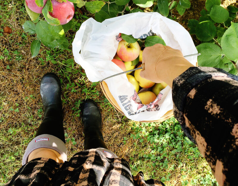 She's So Bright - Apple picking outfit details