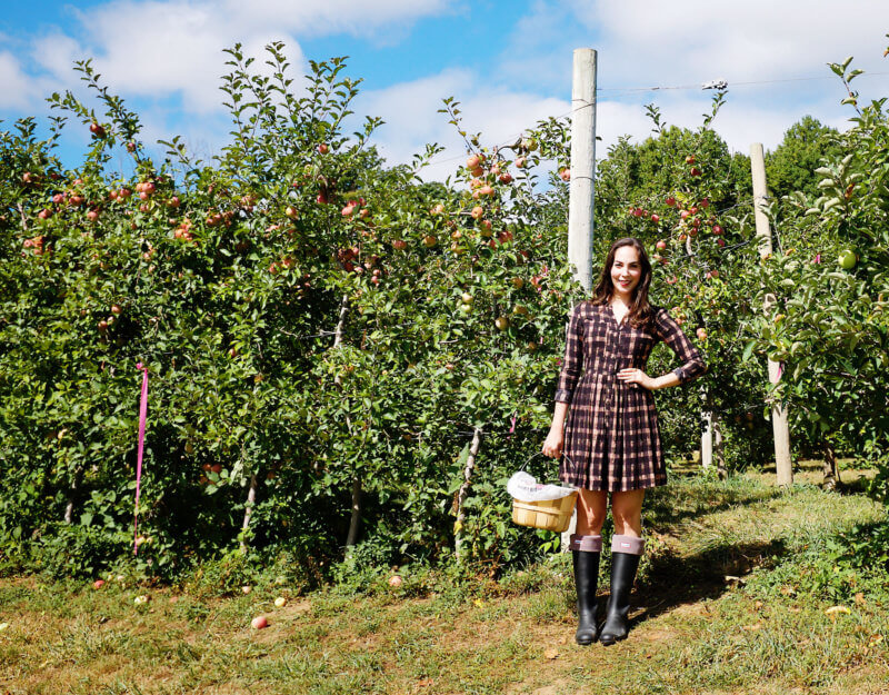 She's So Bright - Eva apple picking in an Anthropologie dress and Hunter Wellington boots
