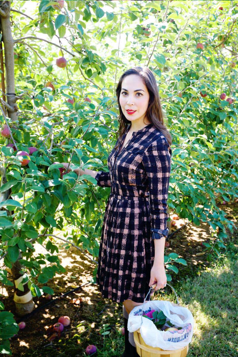 She's So Bright - Eva apple picking in Anthropologie dress