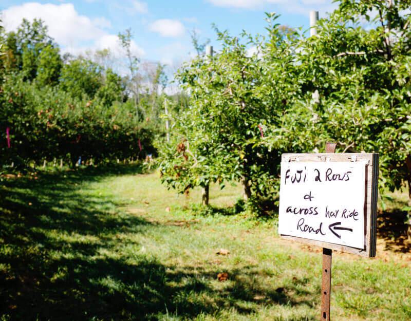 She's So Bright - Fuji apple sign at Wightman's Farm
