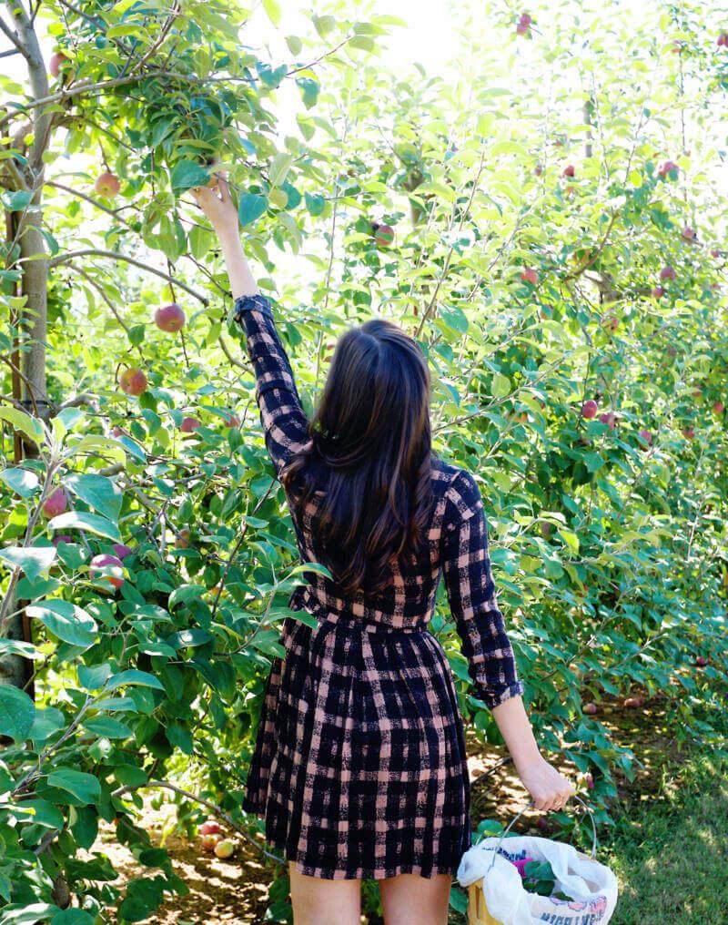 She's So Bright - Eva reaching for apples