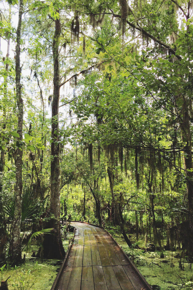 She's So Bright - Jean Lafitte National Historic Park swamp path