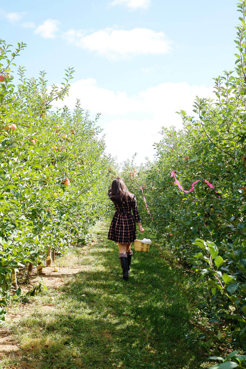 She's So Bright - Eva walking through the apple field
