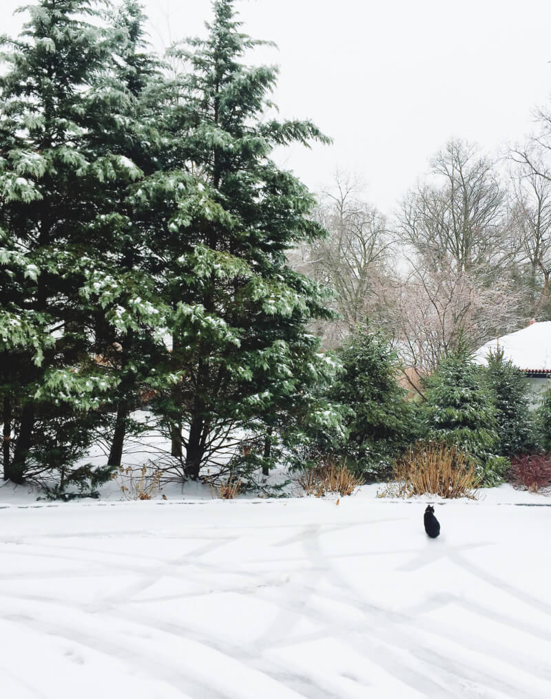 She's So Bright - Ernie in the Snow