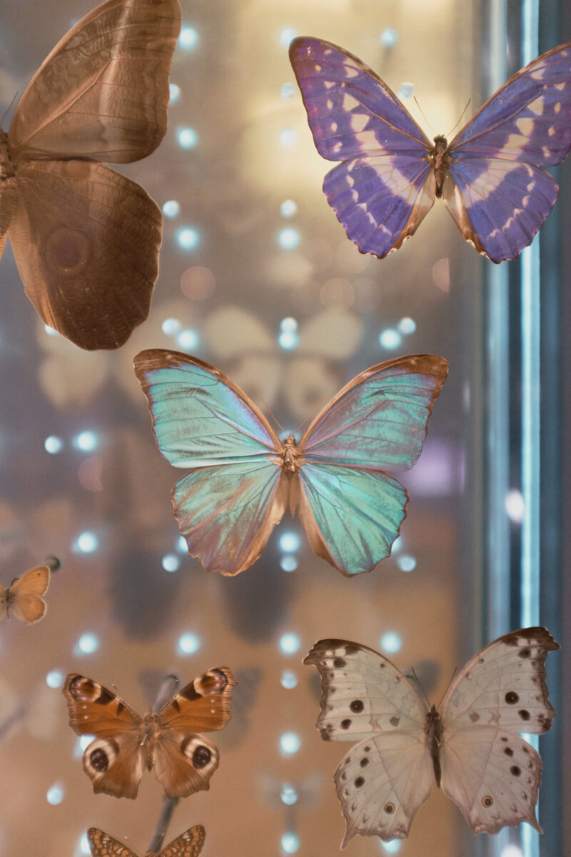 She's So Bright - The Captivating Colors of Paris's Grand Gallery of Evolution
