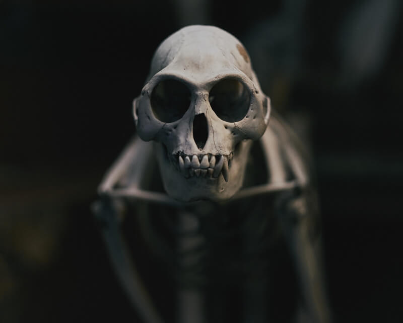 She's So Bright - Dem Bones, Dem Bones, Dem Dry Bones