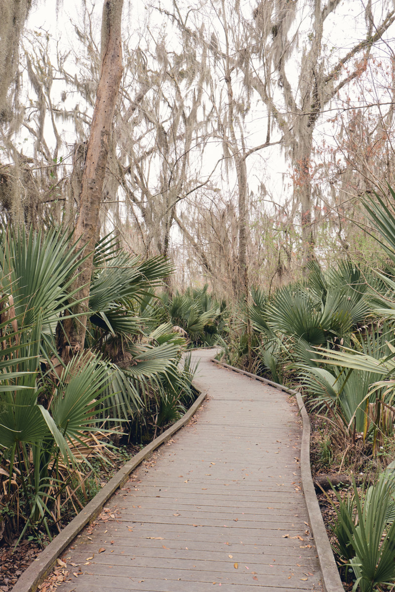 She's So Bright - The Eerie Loveliness of the Jean Lafitte Swamp