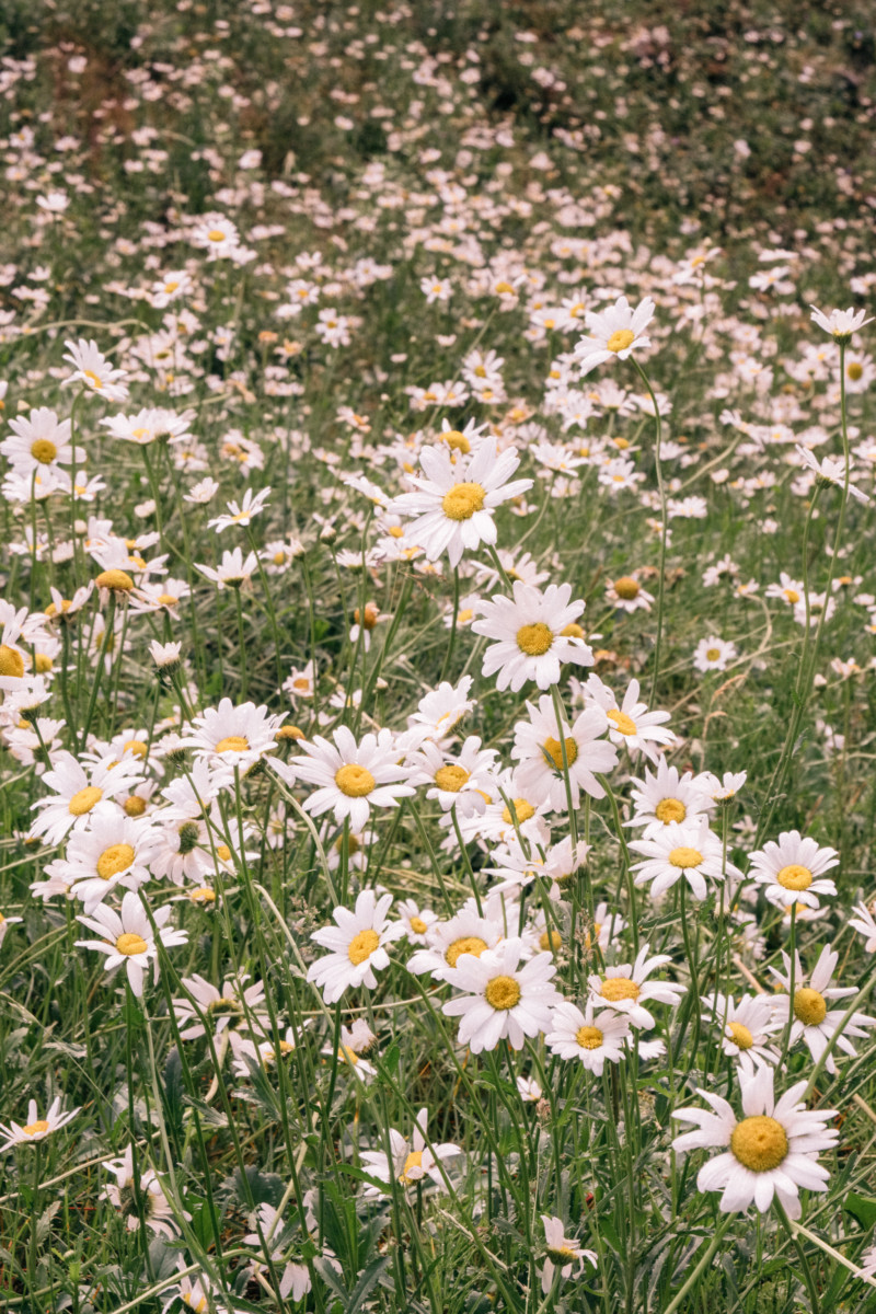 She's So Bright - Eva Goes West To Dunton Hot Springs, Telluride, Colorado, Travel, Old West, Log Cabin, Scenic, Travel Goals, Daisy Flowers, Botanicals