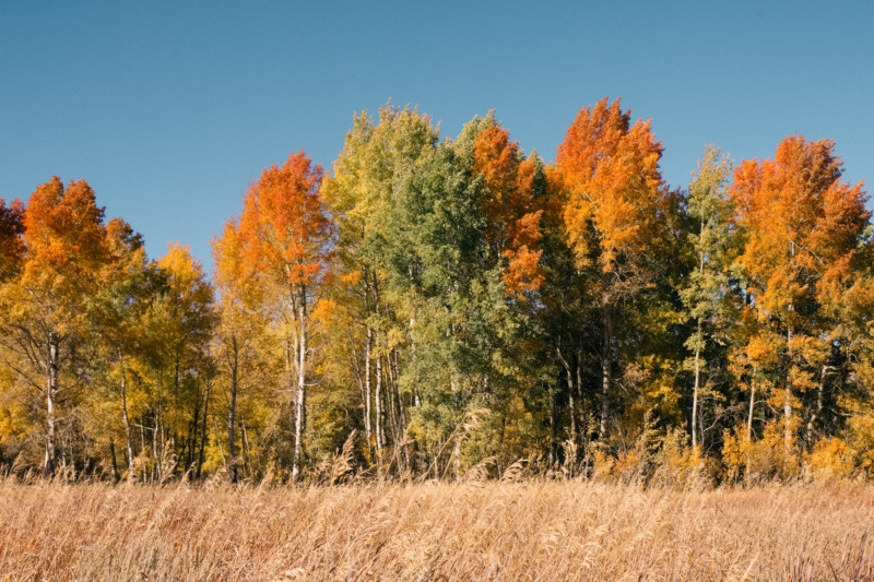 The Colorful Wonders of Fall - She's So Bright, Fall, Fall Colors, Autumn, Rainbow, Leaves, Trees