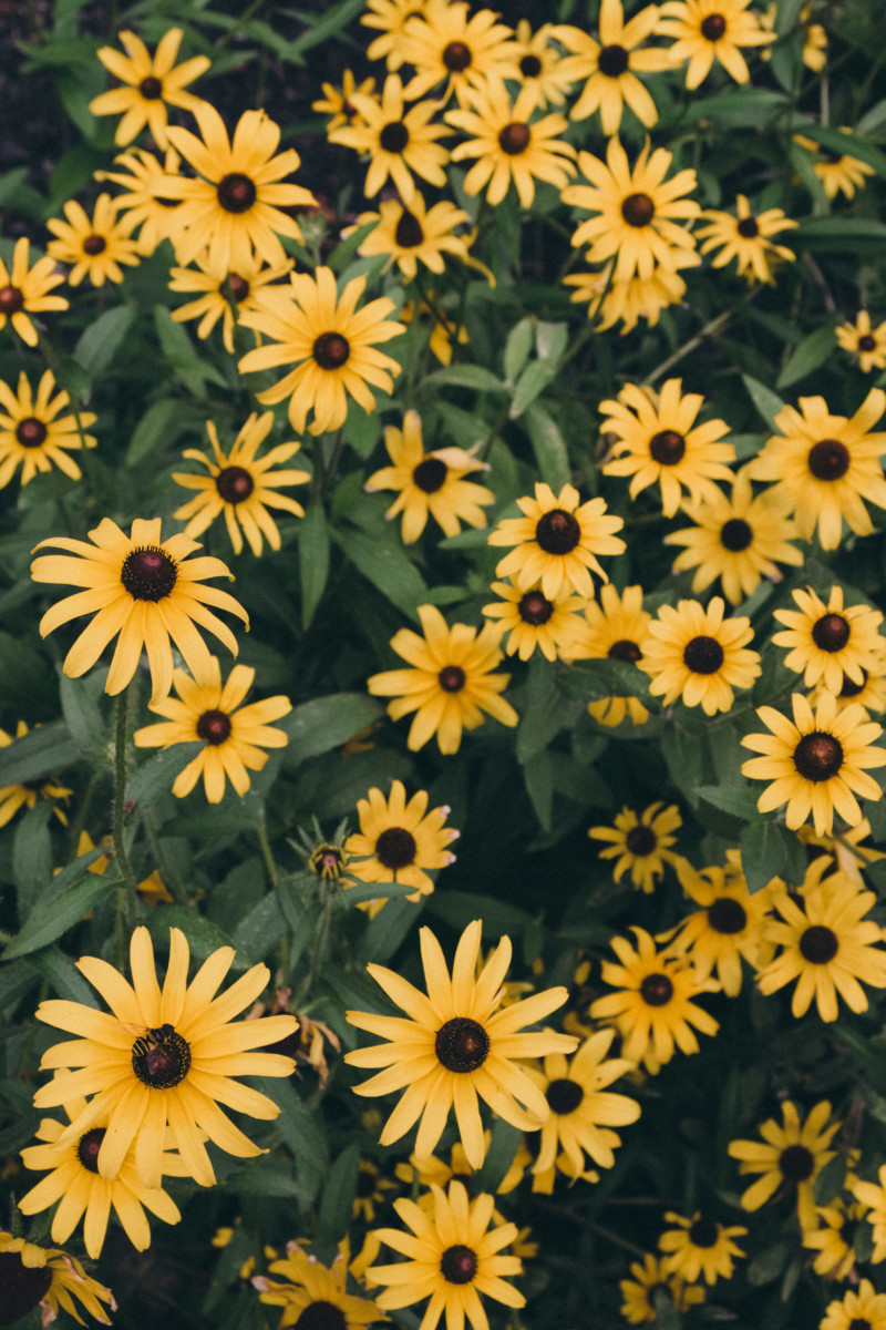 She's So Bright - Thoughts for the Weekend and Looking Forward to Fall, Moody Flowers, Landscape, Garden, Daisy