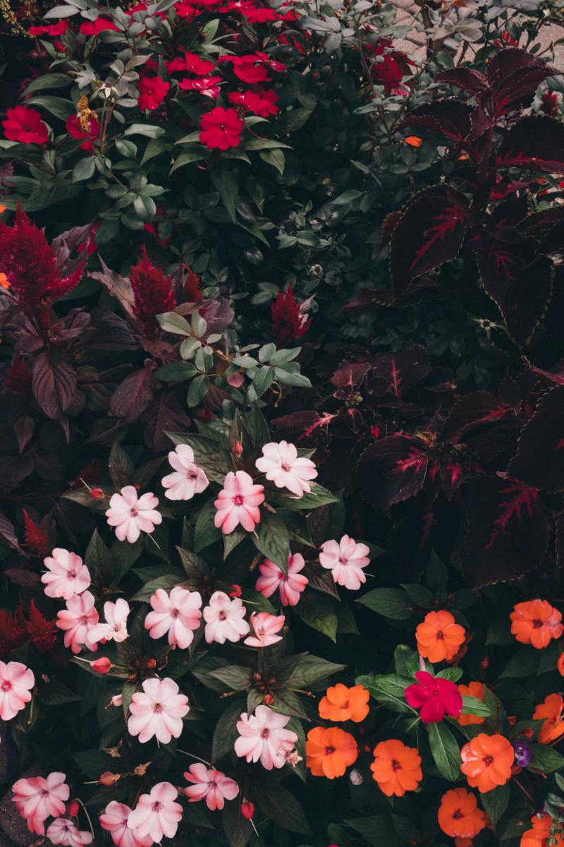 She's So Bright - Thoughts for the Weekend and Looking Forward to Fall, Moody Flowers, Landscape, Garden