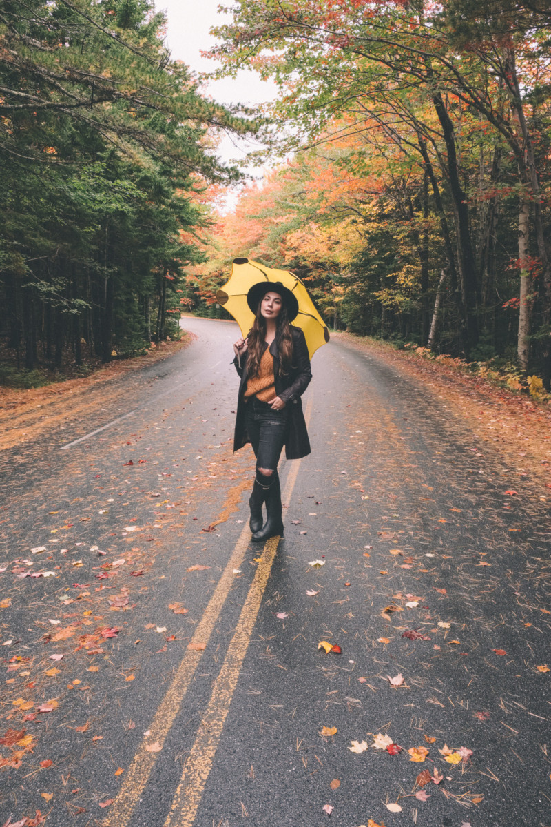 Autumn's Final Breath in Acadia Maine - She's So Bright , Acadia, National Park, Fall Colors, Leaves, Moody,