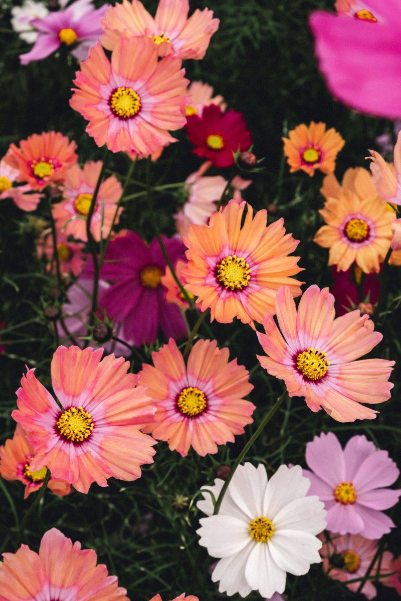 Lost Flowers of Kyoto - She's So Bright, Japan, Kyoto Botanical Gardens, Flowers, Plants, Colors, Photography